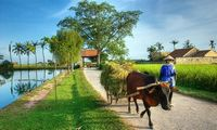 Cycling in Hanoi vicinity to Duong Lam village 1 Day