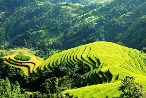Sapa trekking in Muong Hoa valley and homestay overnight