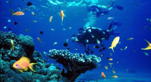 Nha Trang Snorkeling tour 1 Day