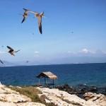 Nha Trang Salangane island 1 Day (Group tour)